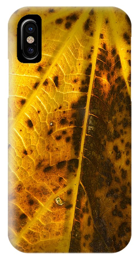 Fig IPhone X Case featuring the photograph Fig Leaf by Perry Van Munster