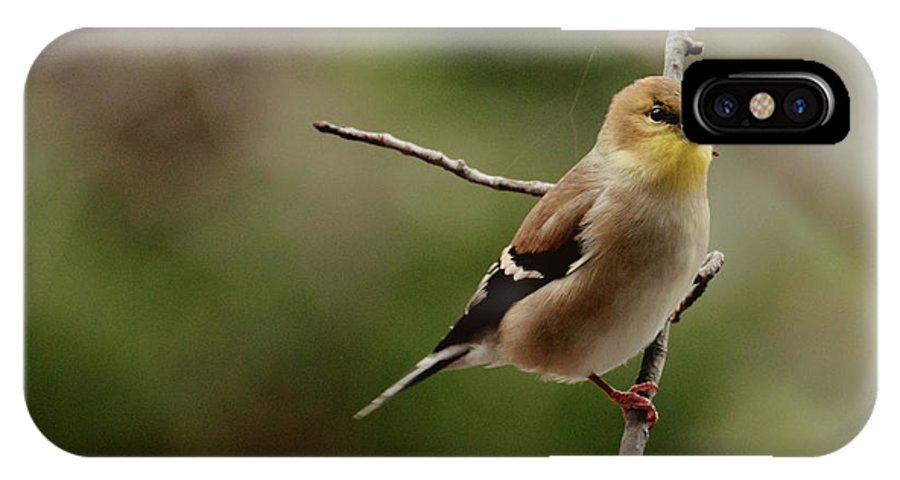 Funch IPhone X Case featuring the photograph Finch by Cheryl Baxter