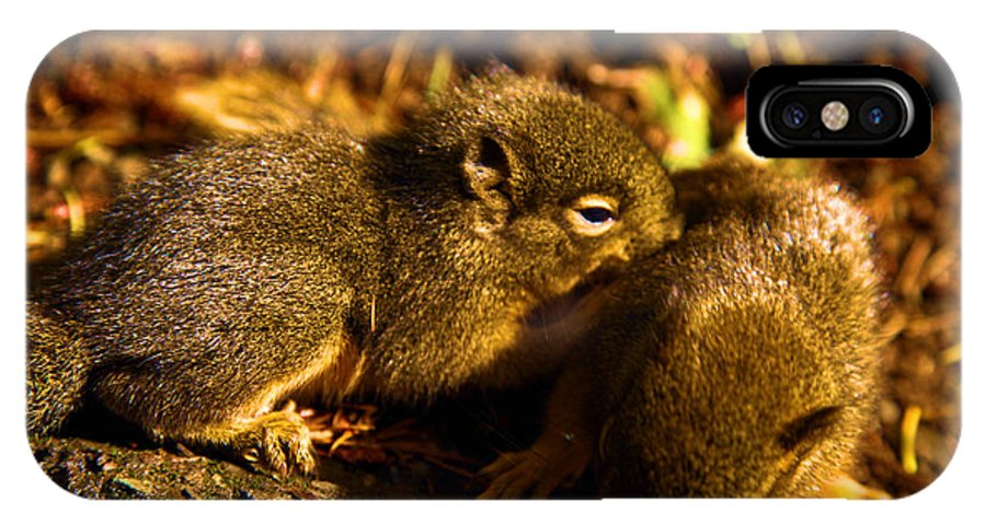 Douglas Squirrels IPhone X / XS Case featuring the photograph Finding Our Way by Adam Jewell