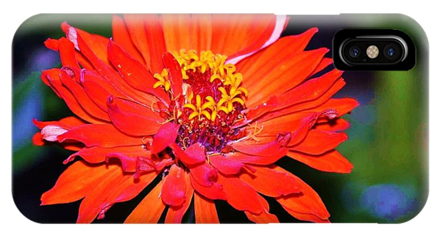 Orange Flower IPhone X / XS Case featuring the photograph Flaming Orange Flower by Ruth Yvonne Ash