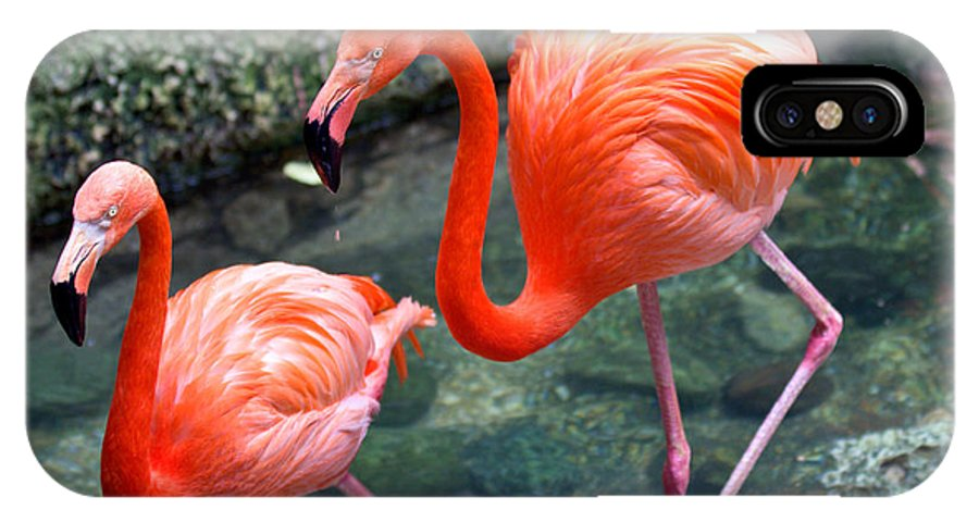 Flamingo IPhone X Case featuring the photograph Flamingo River Walk by Elizabeth Hart