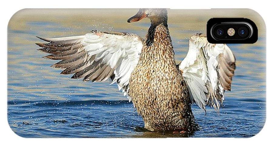 Duck IPhone X Case featuring the photograph Flapping In The Breeze by Fraida Gutovich