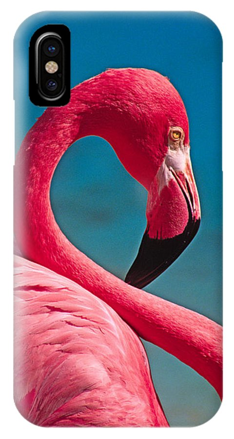 Flamingo IPhone X Case featuring the photograph Flexible Flamingo by Michele Burgess
