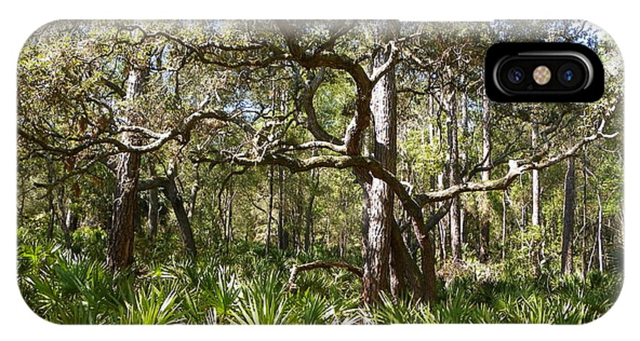 Palmettos IPhone X / XS Case featuring the photograph Florida Palmetto Scrub I by Sheri McLeroy