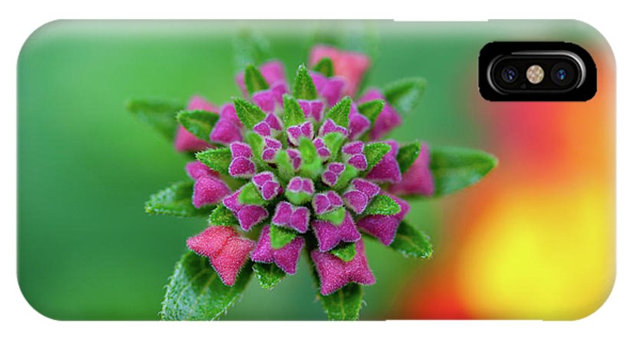 Purple IPhone X Case featuring the photograph Flower Pop by Pam Fong