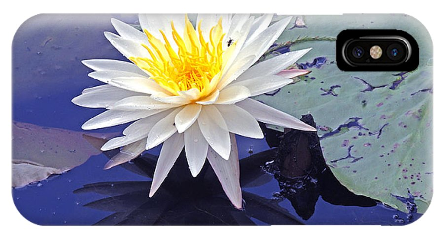 Lily Pads IPhone X Case featuring the photograph Flowering Lily-pad- St Marks Fl by Marilyn Holkham