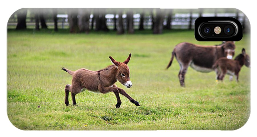 Miniature Donkey IPhone X Case featuring the photograph Flying Abbey by Tiana McVay