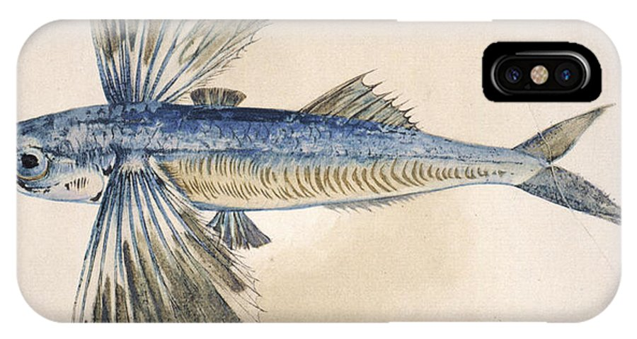 1585 IPhone X Case featuring the photograph Flying-fish, 1585 by Granger