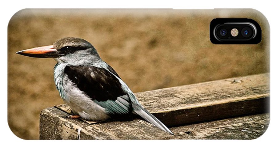Bird IPhone X / XS Case featuring the photograph Follow Your Nose by Trish Tritz