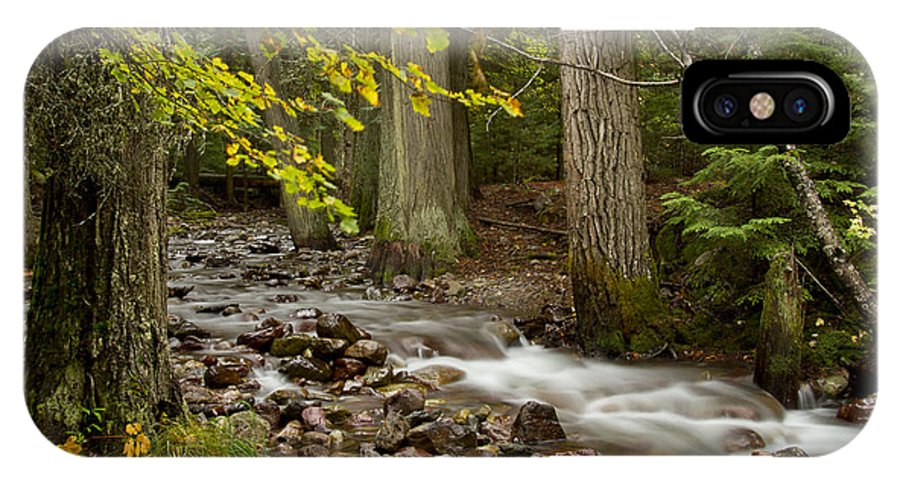 Stream IPhone X Case featuring the photograph Forest Brook by Idaho Scenic Images Linda Lantzy