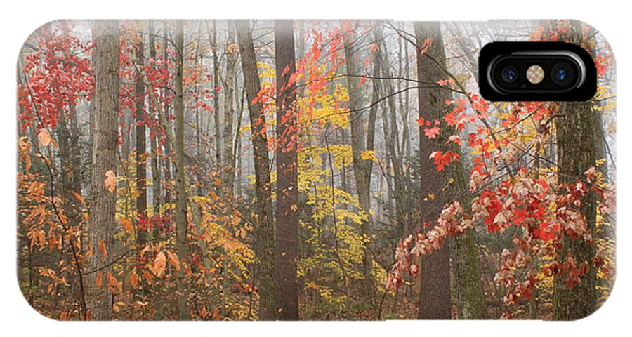 Autumn IPhone X Case featuring the photograph Forest In Late Autumn by John Burk