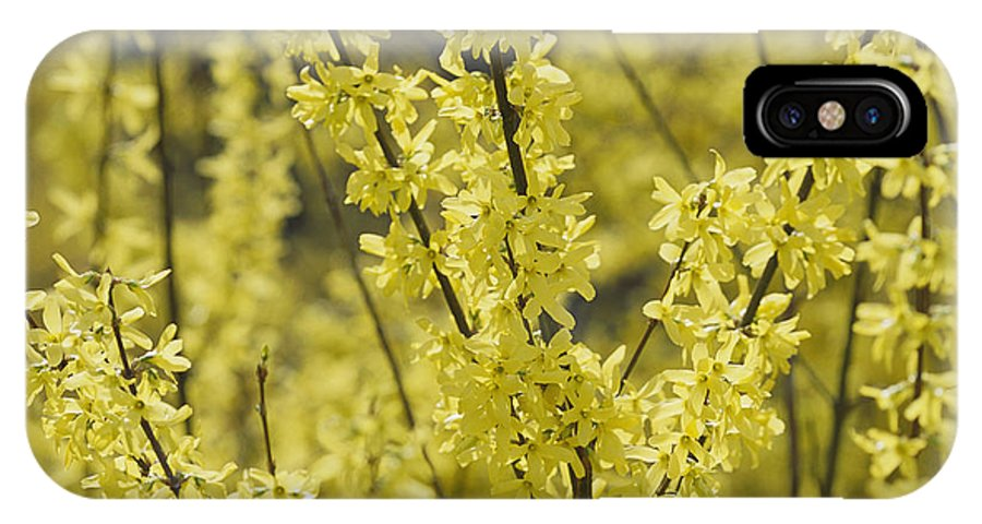 Scenes And Views IPhone X / XS Case featuring the photograph Forsythia In Full Bloom by Darlyne A. Murawski