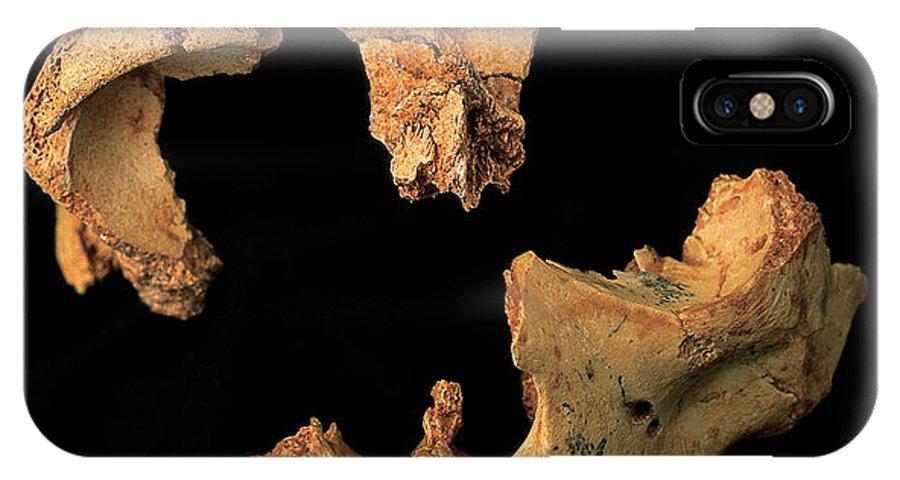 El Nino De La Gran Dolina IPhone X / XS Case featuring the photograph Fossilised Skull, Gran Dolina by Javier Truebamsf