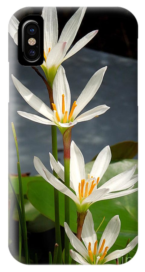 Marsh IPhone X Case featuring the photograph Four Tall Marsh Grass Blooms by Renee Trenholm