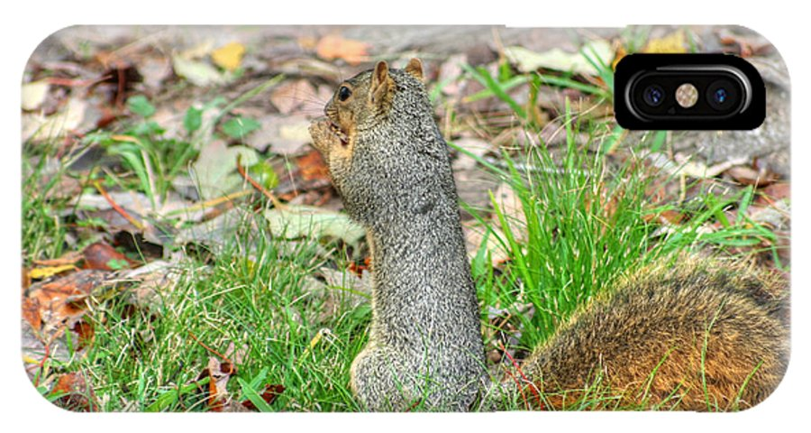 Squirrel Photographs IPhone X Case featuring the photograph Fox Squirrel Eating Nut by Ester Rogers