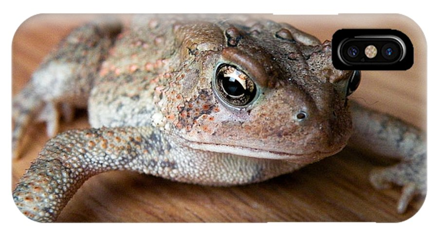 Frog IPhone X Case featuring the photograph Freddy by Trish Tritz
