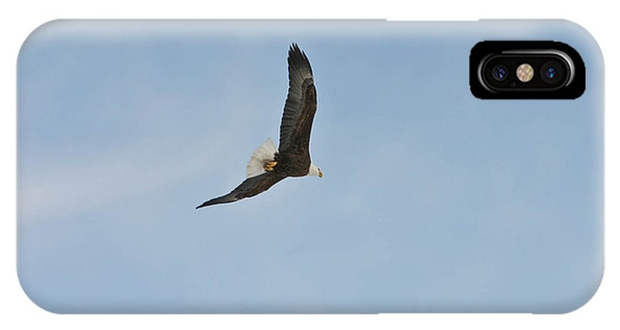 Bald Eagle IPhone X Case featuring the photograph Free Flight by Mitch Shindelbower