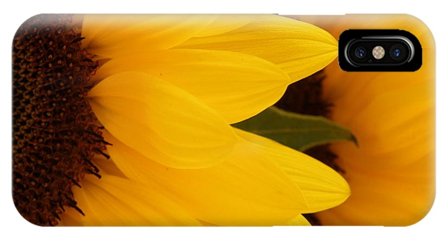Sunflower IPhone X Case featuring the photograph French Sunflowers by Lainie Wrightson