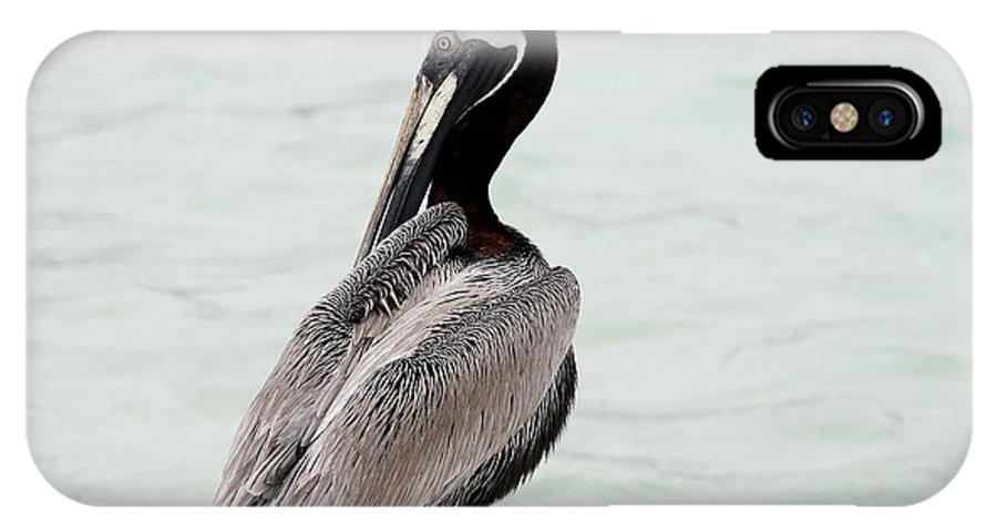 Bird IPhone X / XS Case featuring the photograph Friendly Brown Pelican by Teresa Zieba