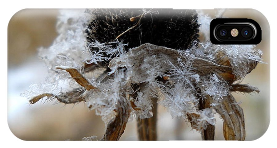 Close Up IPhone X Case featuring the photograph Frost And Snow On Dead Daisy by Kent Lorentzen