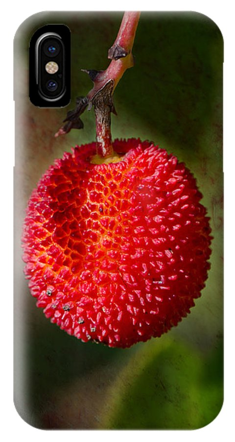 Fruit IPhone X / XS Case featuring the photograph Fruit Of Strawberry Tree by Perry Van Munster