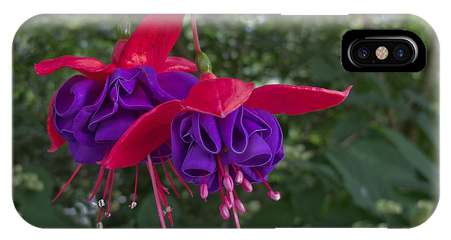 Fuchsia IPhone X Case featuring the photograph Fuchsia Flower by Arlene Carmel