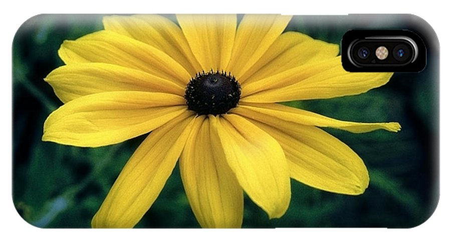 Asteraceae IPhone X Case featuring the photograph Fully Opened by Patrick Kessler