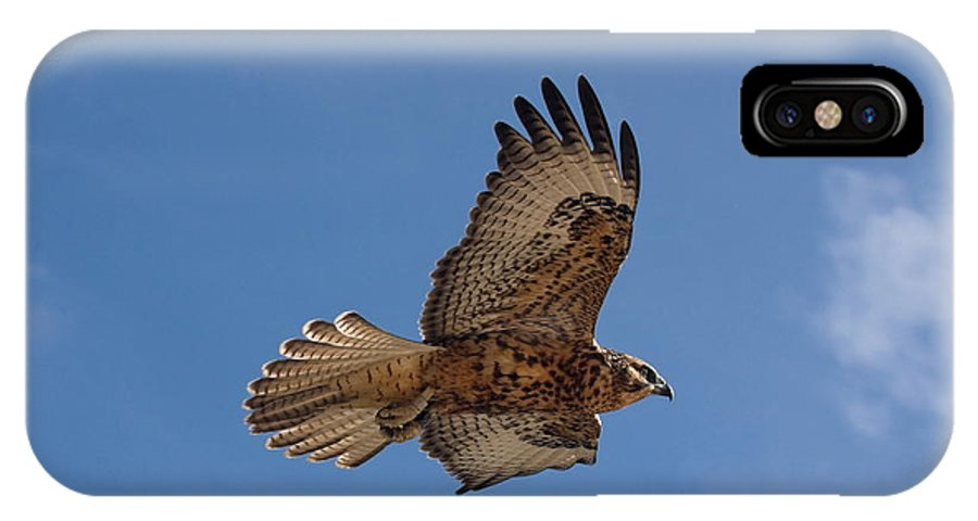 Galapagos Hawk Flying IPhone X Case featuring the photograph Galapagos Hawk Flying by Sally Weigand