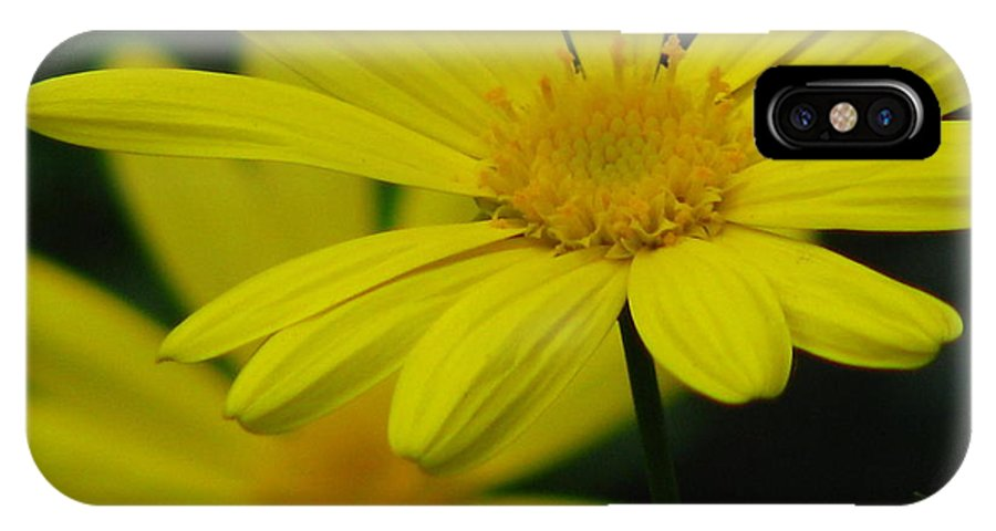 Flower IPhone X Case featuring the photograph Garden Light by Paul Slebodnick