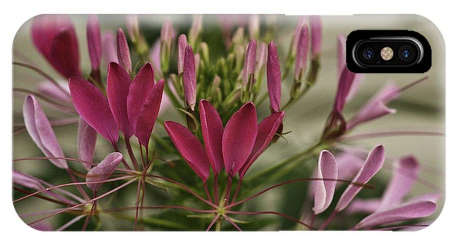 Garden IPhone X Case featuring the photograph Garden Stinkweed Flower 1 by Douglas Barnett