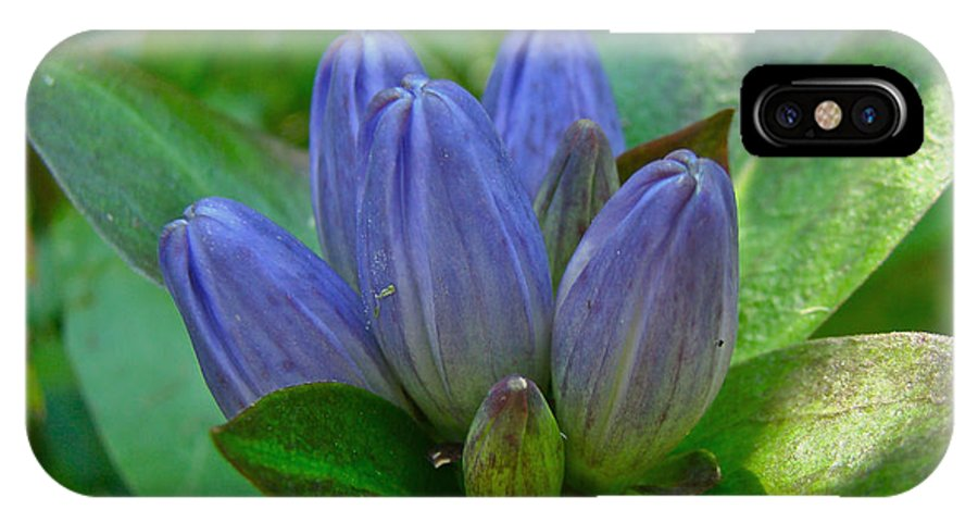 Gentian IPhone X Case featuring the photograph Gentiana Andrewsii - Bottle Gentian - Closed Gentian - Closed Bottle Gentian by Mother Nature