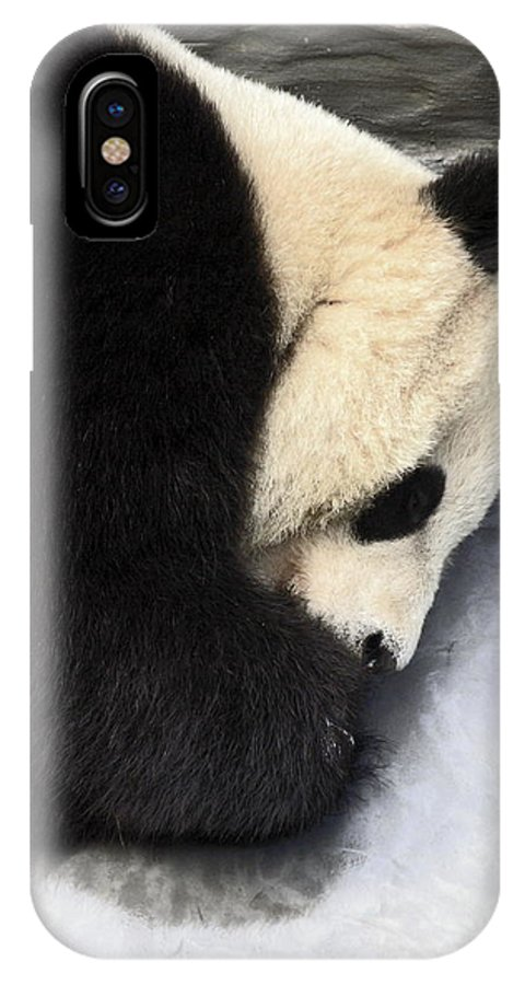 Giant Panda Bear Lying On Ground IPhone X Case featuring the photograph Giant Panda Portrait by Sally Weigand