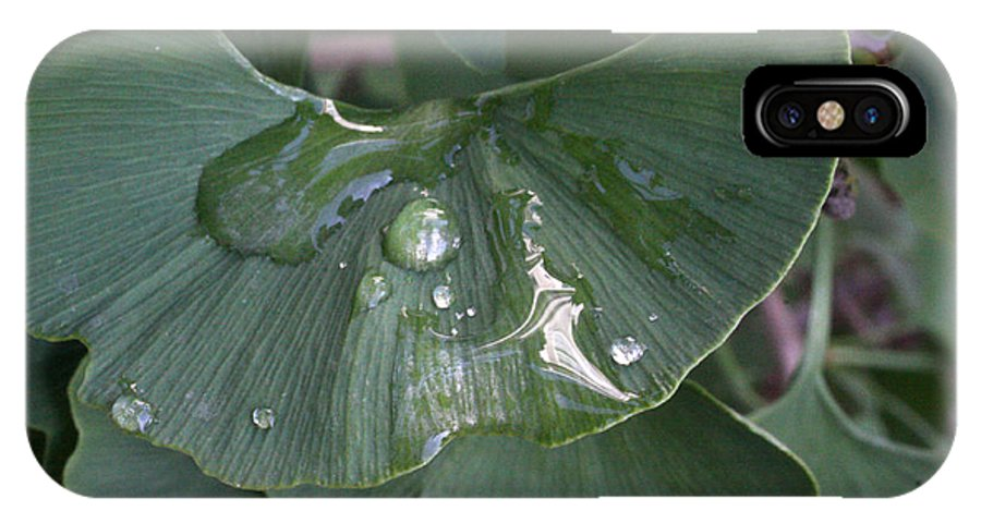 Ginko Leaf IPhone X Case featuring the photograph Ginko Reflecting by David Bearden