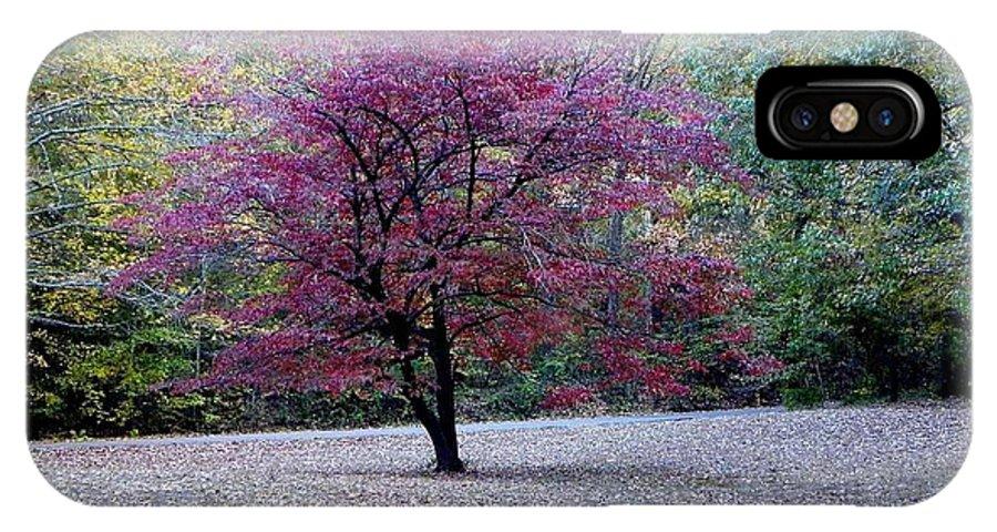 Dogwood Tree IPhone X Case featuring the photograph Glenna's Dogwood In The Fall by Tisha Clinkenbeard