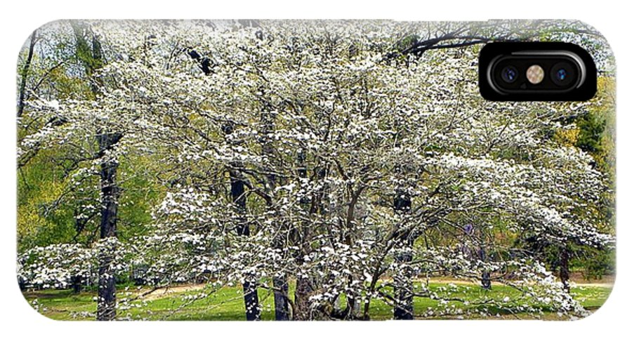 Dogwood Tree IPhone X Case featuring the photograph Glenna's Dogwood In The Spring by Tisha Clinkenbeard