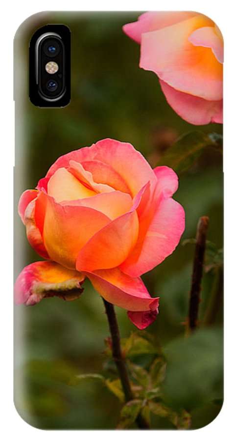 Rose IPhone X Case featuring the photograph Glowing Pair by Paul Mangold