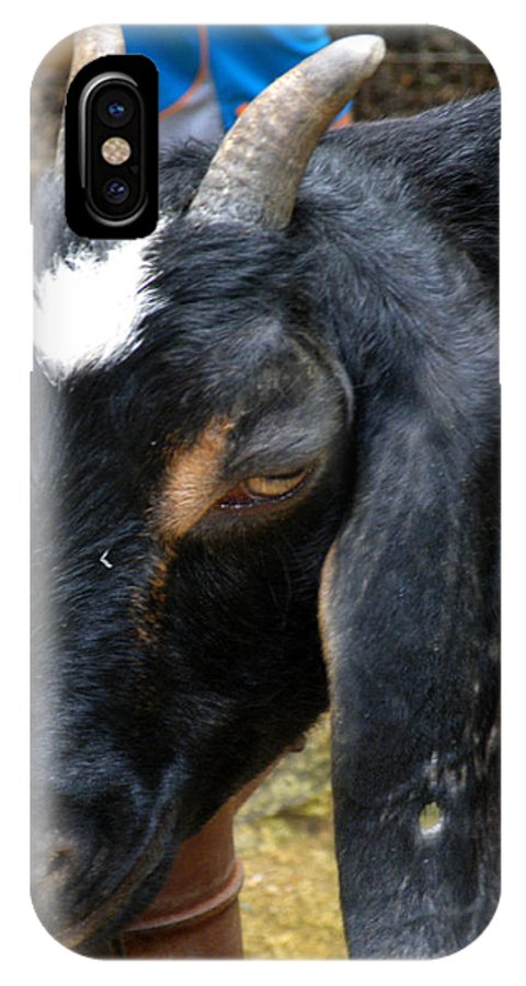 Animal IPhone X Case featuring the photograph Goat by Kimmary MacLean