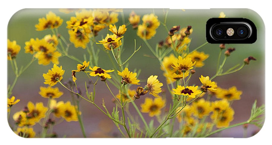 Coreopsis Basalis IPhone X Case featuring the photograph Golden Coreopsis Tickseed Wildflowers by Kathy Clark