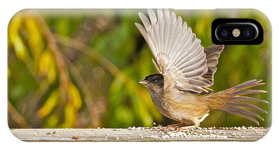 Photography IPhone X Case featuring the photograph Golden Crowned Sparrow by Sean Griffin