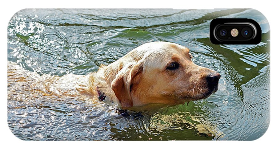 Animal IPhone X Case featuring the photograph Golden Retriever Swimming Close by Susan Leggett