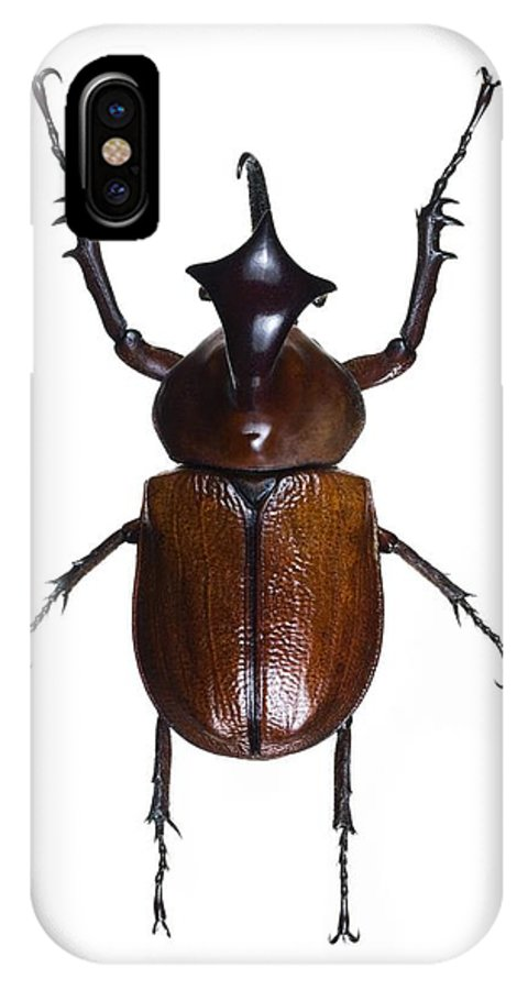 Golofa Claviger IPhone X / XS Case featuring the photograph Golofa Scarab Beetle by Lawrence Lawry