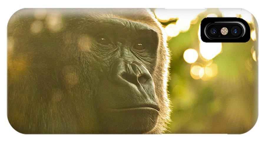 Gorilla IPhone X Case featuring the photograph Gorilla At Dusk by Rheann Earnest