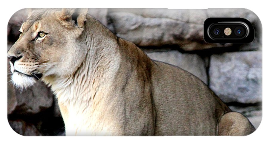 Lioness IPhone X Case featuring the photograph Got You In My Sights by Kathy White