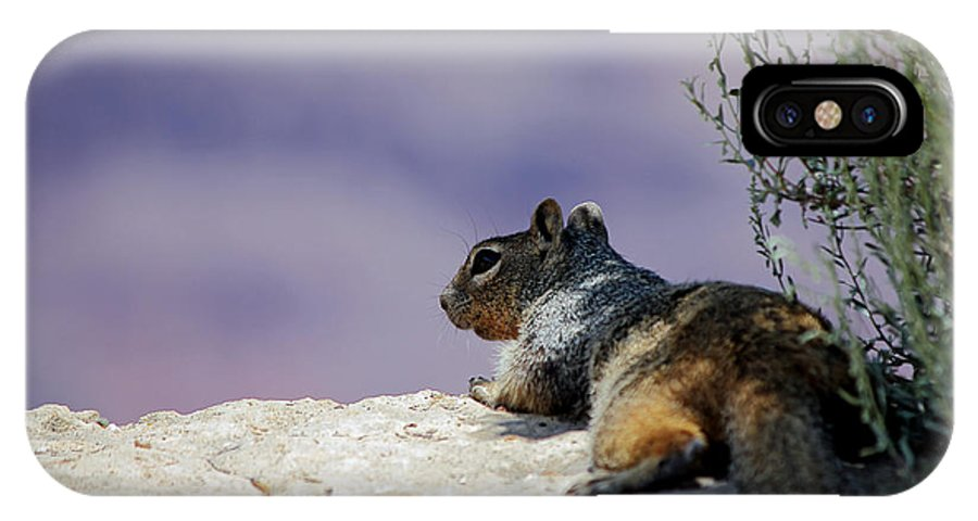 Squirrel IPhone X Case featuring the photograph Grand Canyon Squirrel by Cedric Darrigrand