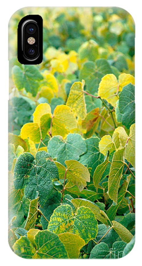 Grape Vines IPhone X Case featuring the photograph Grapevines In Azores Islands by Gaspar Avila