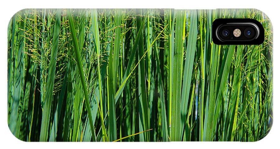 Grassland IPhone X Case featuring the photograph Grassland by Rachel Cohen