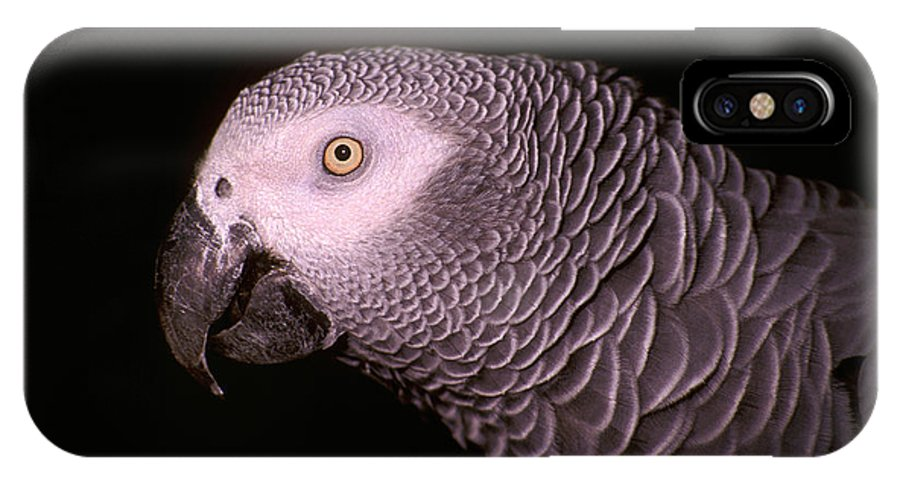 Parrot IPhone X Case featuring the photograph Gray Parrot by Paul W Faust - Impressions of Light