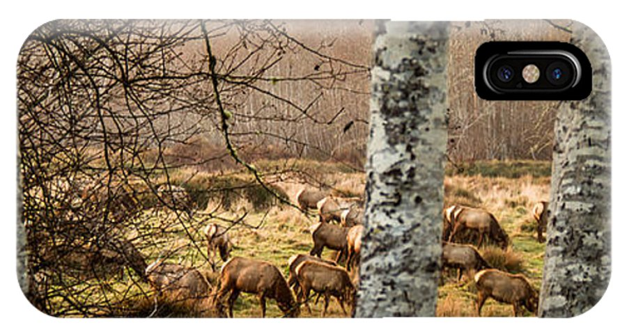 Elk IPhone X Case featuring the photograph Grazefest by Randy Wood