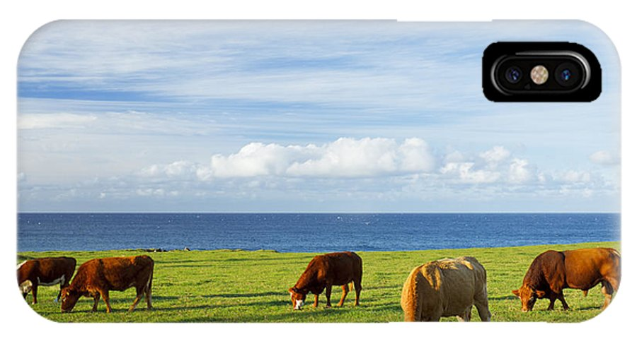 Agricultural IPhone X Case featuring the photograph Grazing Cows by MakenaStockMedia - Printscapes