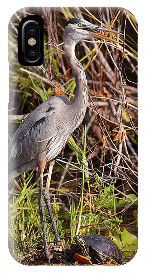 Turtle IPhone X / XS Case featuring the photograph Great Blue Heron And Turtle by Bruce J Robinson